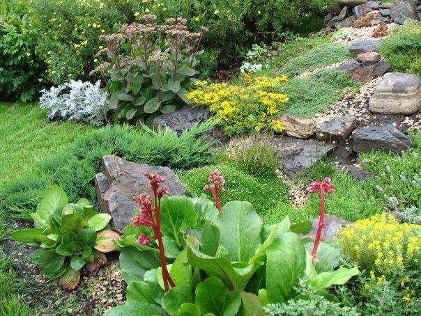 Какие растения можно сажать на территории детского сада 74